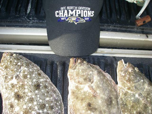 Name:  3 flounder -ravens hat.jpg Views: 114 Size:  74.4 KB
