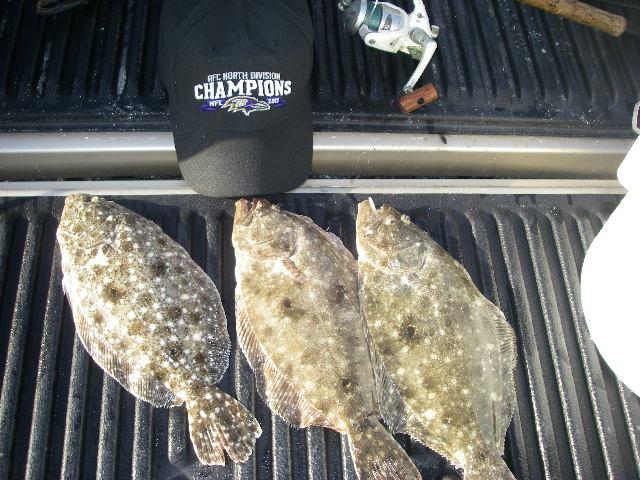 Name:  Beach flounder.jpg Views: 40 Size:  134.2 KB