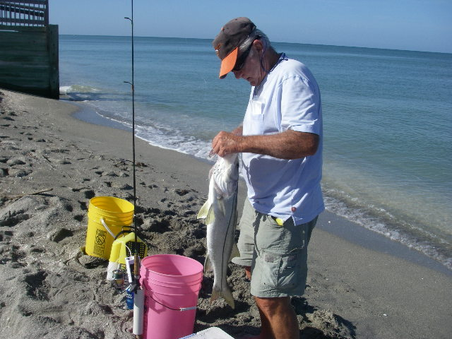 Name:  Beach Snook.jpg