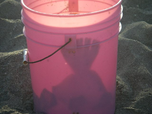 Name:  flounder in bucket.jpg Views: 97 Size:  46.3 KB