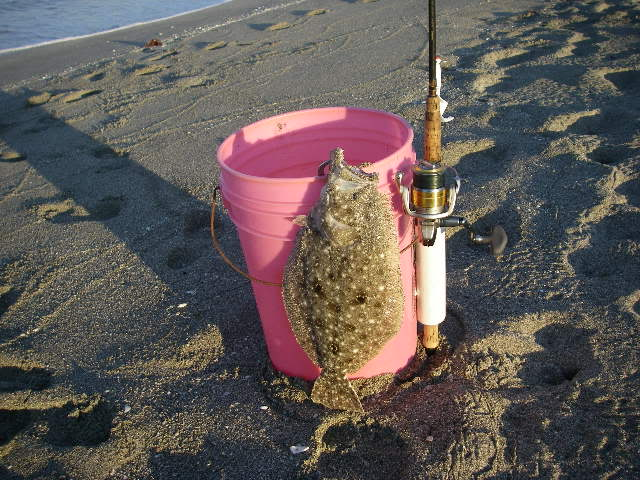 Name:  flounder pink bucket.jpg