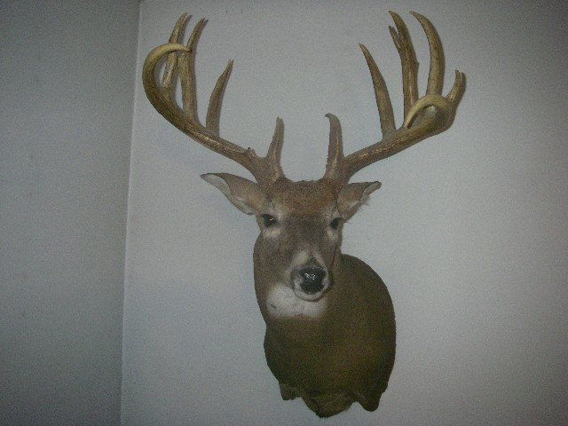 Name:  Johny's deer (2).jpg