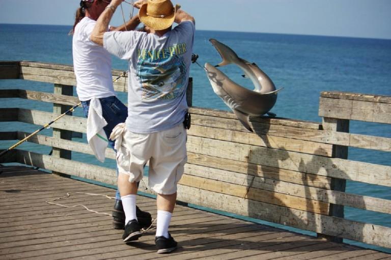 Name:  Sharky's Pier.jpg Views: 74 Size:  125.5 KB